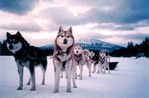 Maine Dogsledding Adventures: Image 138