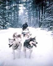 Maine Dogsledding Adventures: Image 139