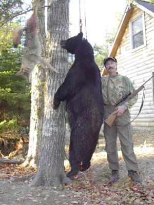 Maine Bear