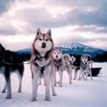 Maine Dogsledding