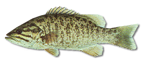 how to cook smallmouth bass